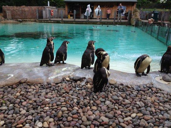 Londen_London_Zoo