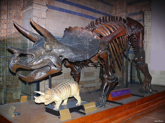 Londen_Nat-historic-Triceratops-ZE002.jpg