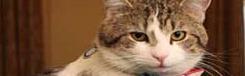 cat larry