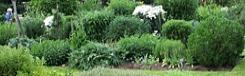 physic garden chelsea